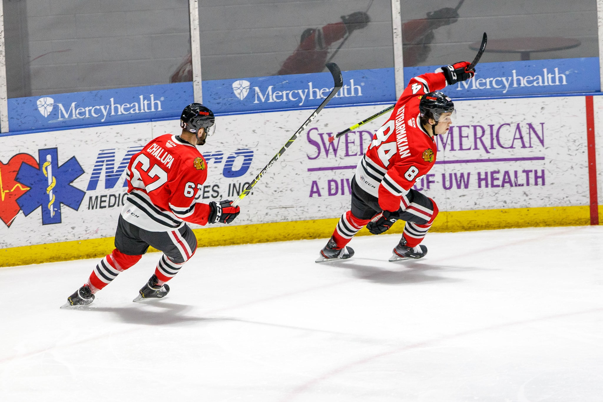 IceHogs Wolves